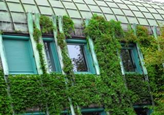 eco green housing plants house