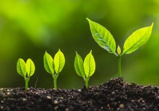 grow growth plant increase