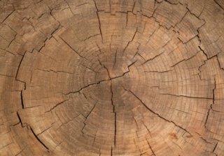 growth tree rings