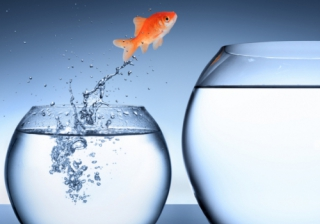 rise growth improve move new job fish bowl