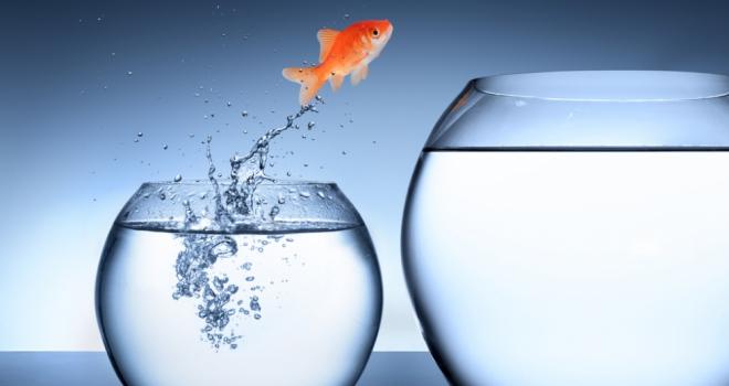 rise growth improve move new job fish bowl